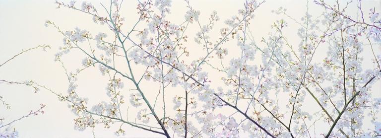 encandilarte-kantanen-sakura